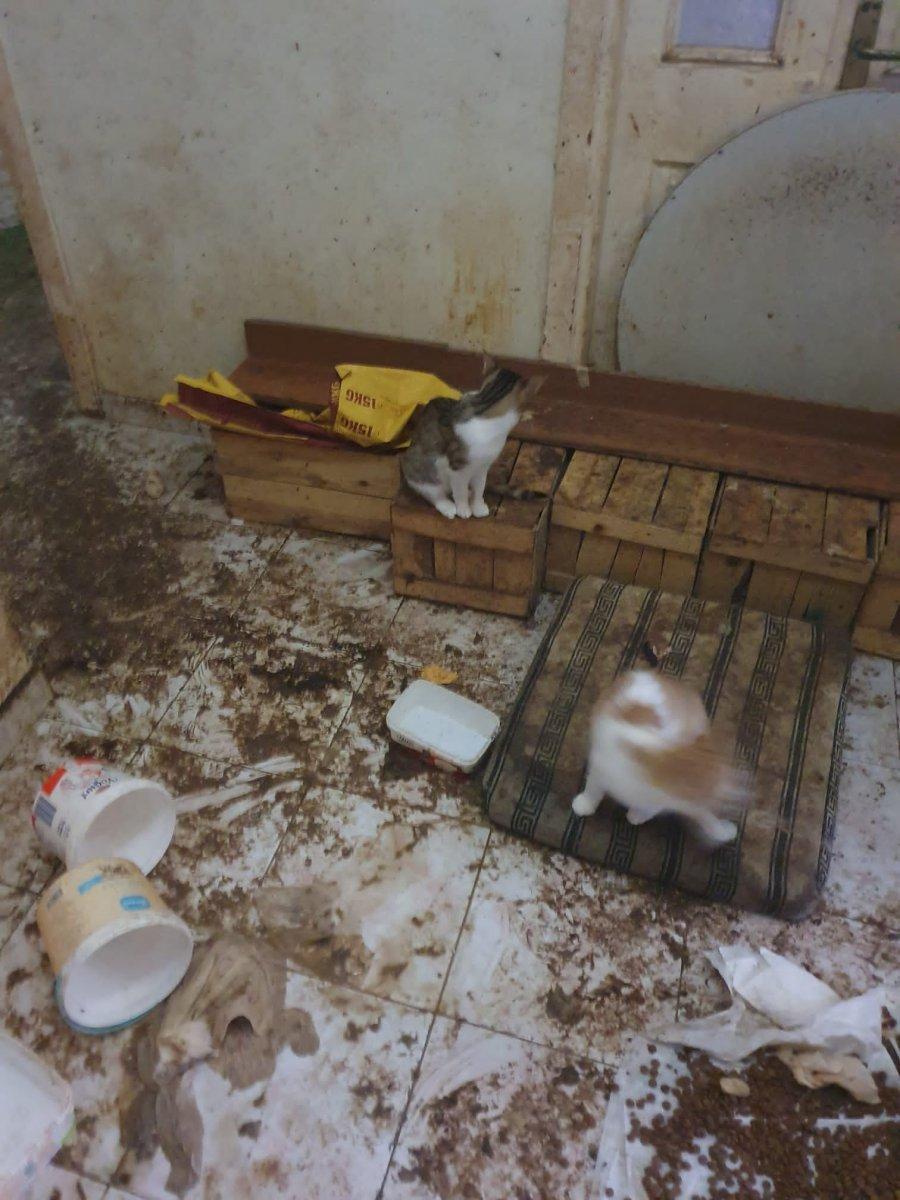 Bolu'da yaşlı kadının koku yayan evinden 50 kedi çıktı  #4