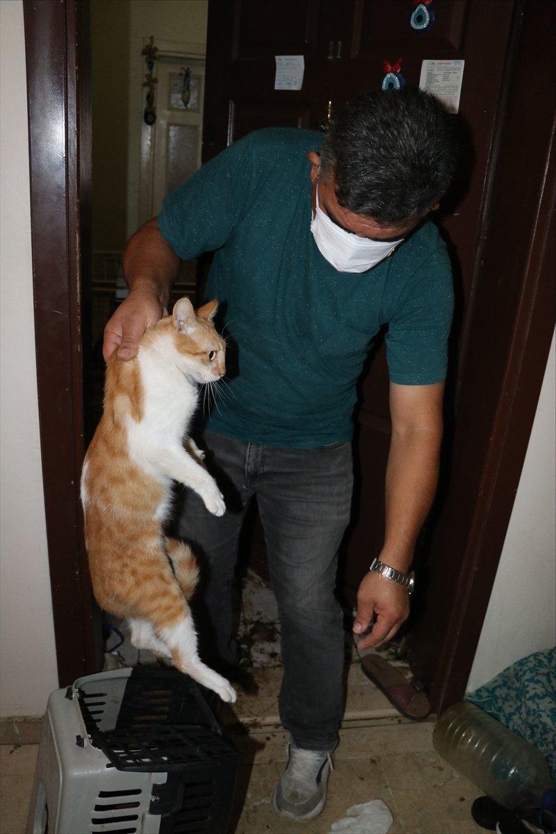 Bolu'da yaşlı kadının koku yayan evinden 50 kedi çıktı  #9