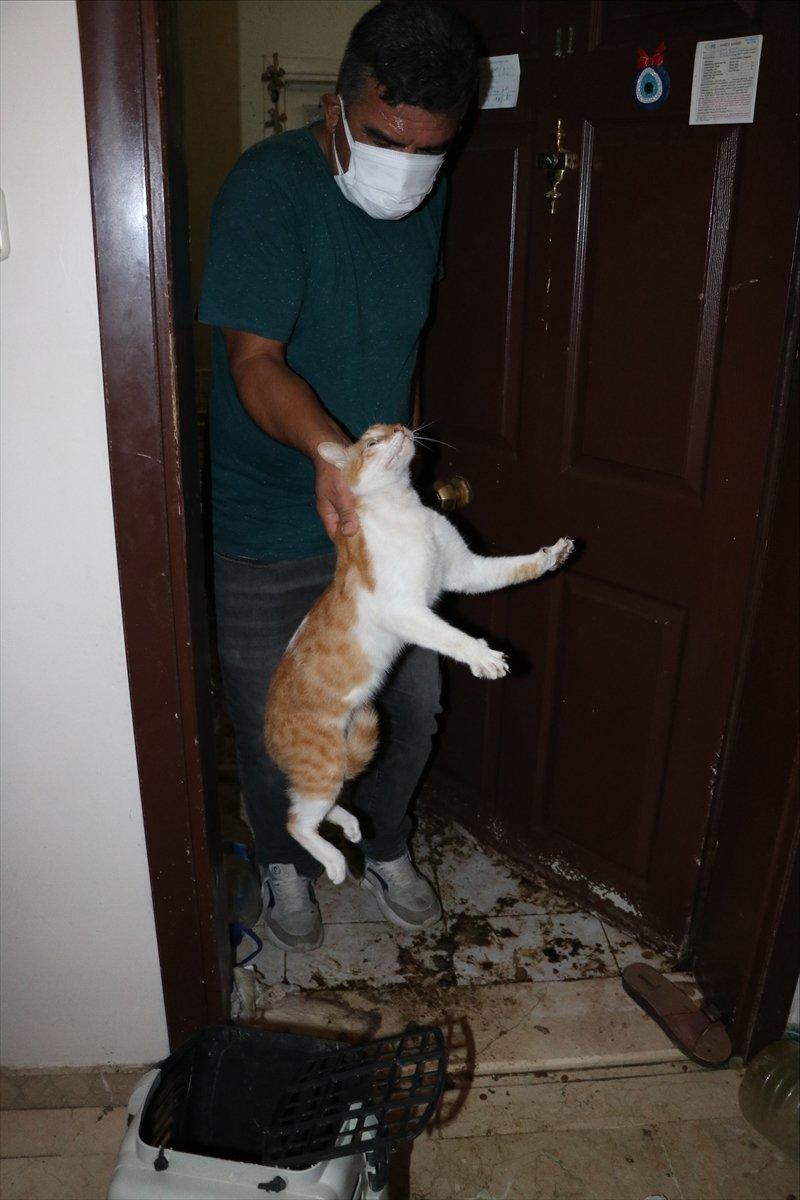 Bolu'da yaşlı kadının koku yayan evinden 50 kedi çıktı  #11