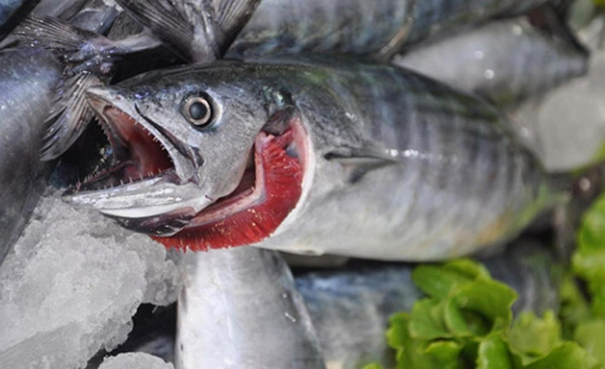 Eylül ün en lezzetlisi: Palamut balığının faydaları #1
