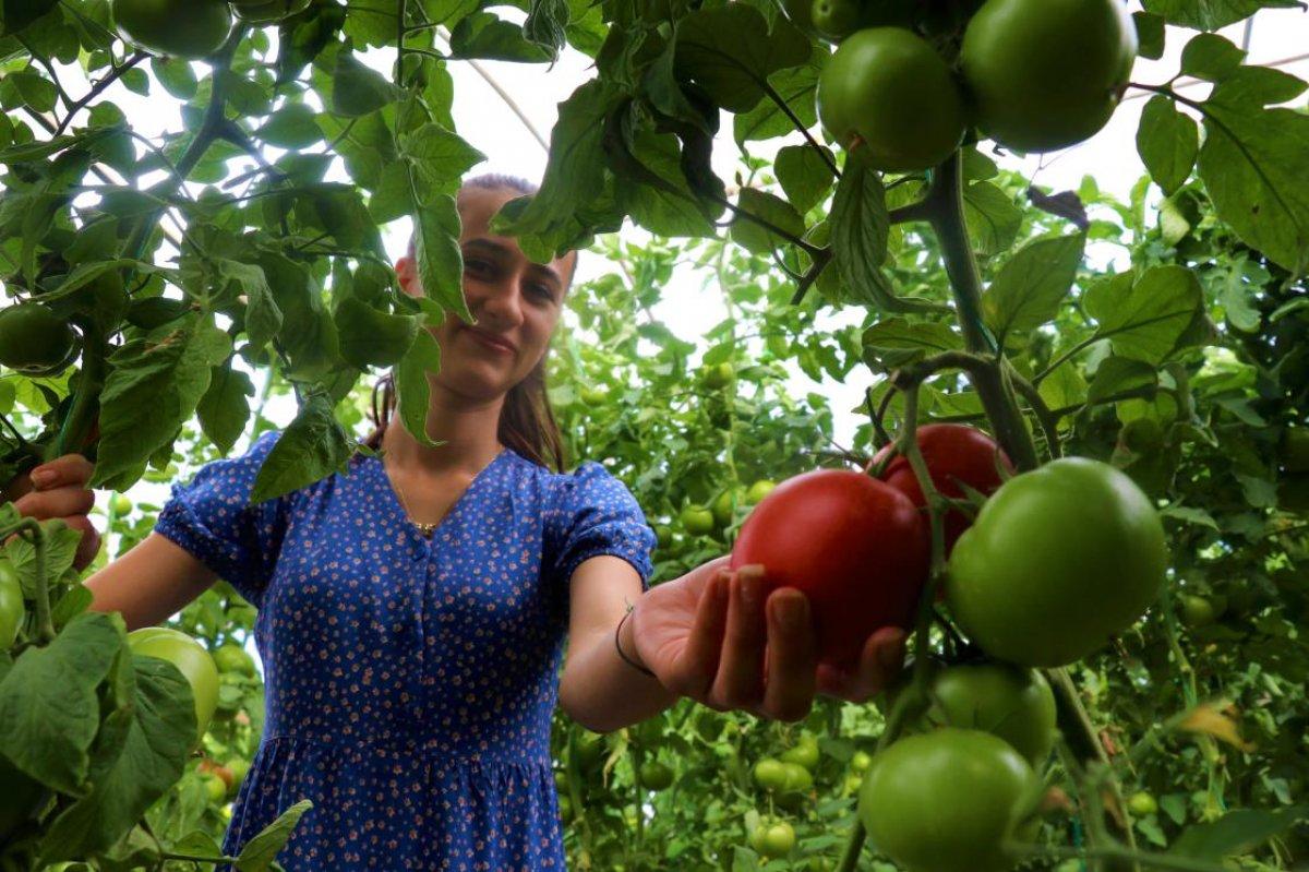 Burdur un Söğüt domatesine yoğun ilgi #2