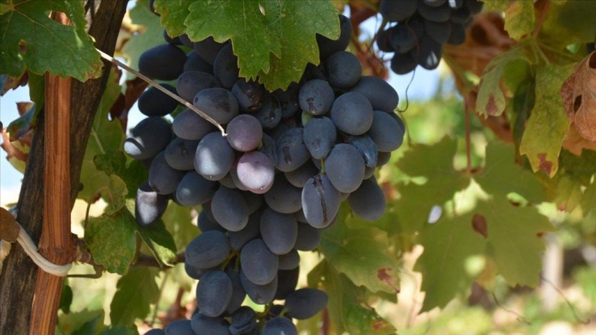 Yaş meyve ve sebze ihracatı ağustosta yüzde 14 arttı #2