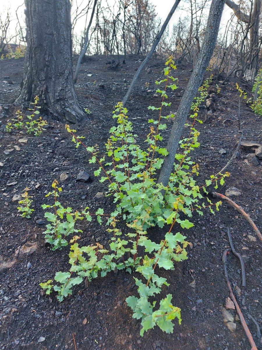 Marmaris te yanan ormanlar yeniden yeşeriyor #5