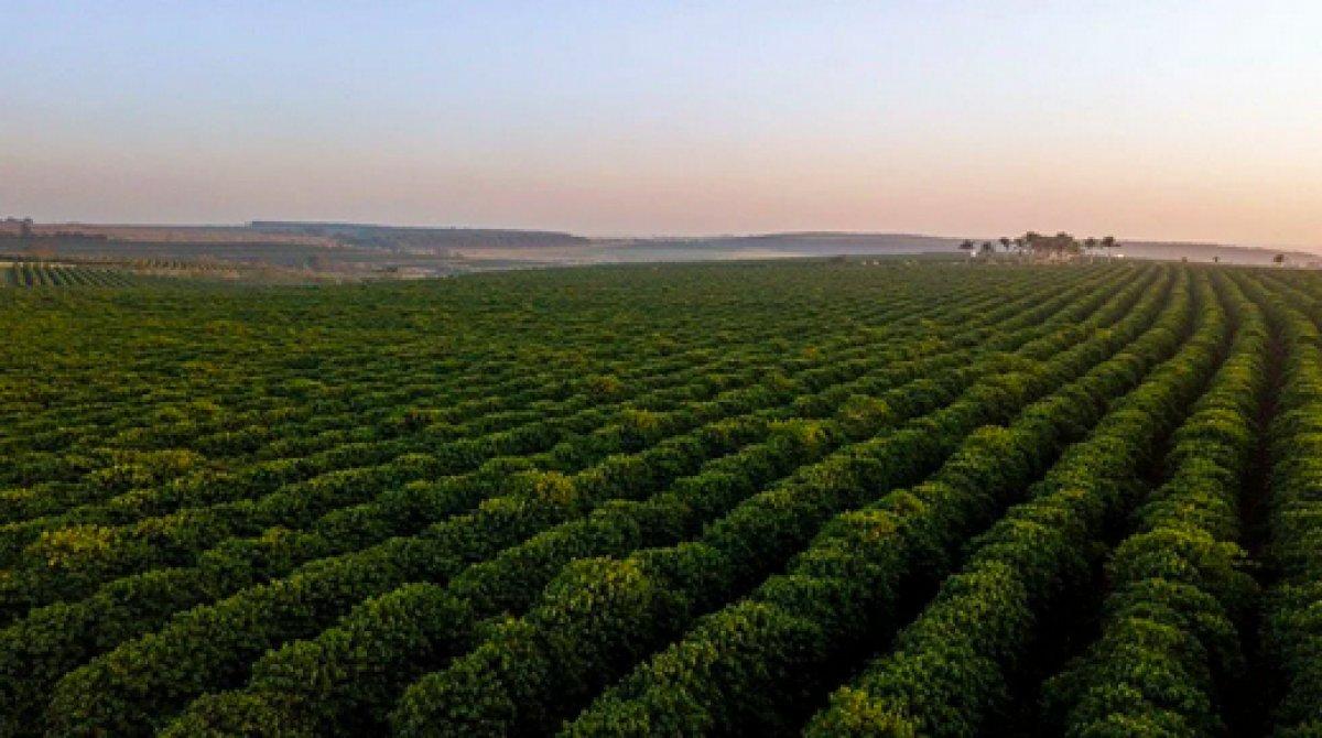 Kahve türlerinin yüzde 60 ı tükeniyor #4