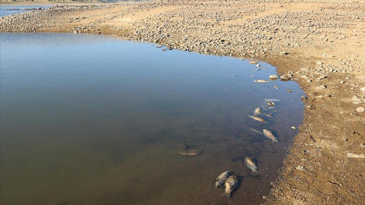 Van da artan balık ölümleri incelemeye alındı #4