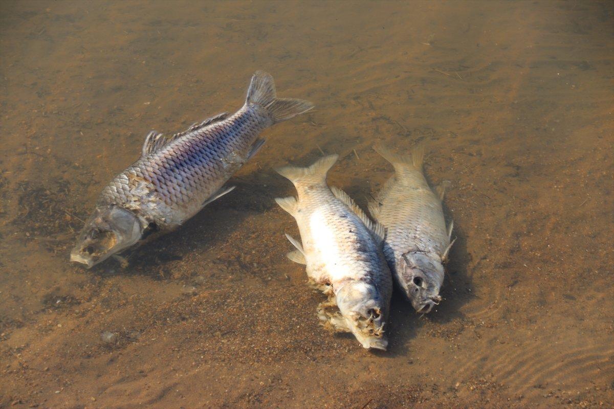 Van da artan balık ölümleri incelemeye alındı #5