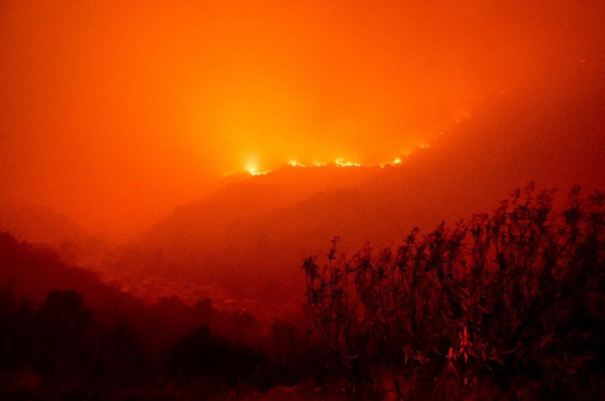 Kaliforniya daki yangınlarda dünyanın en büyük ağaçları tehdit altında #3