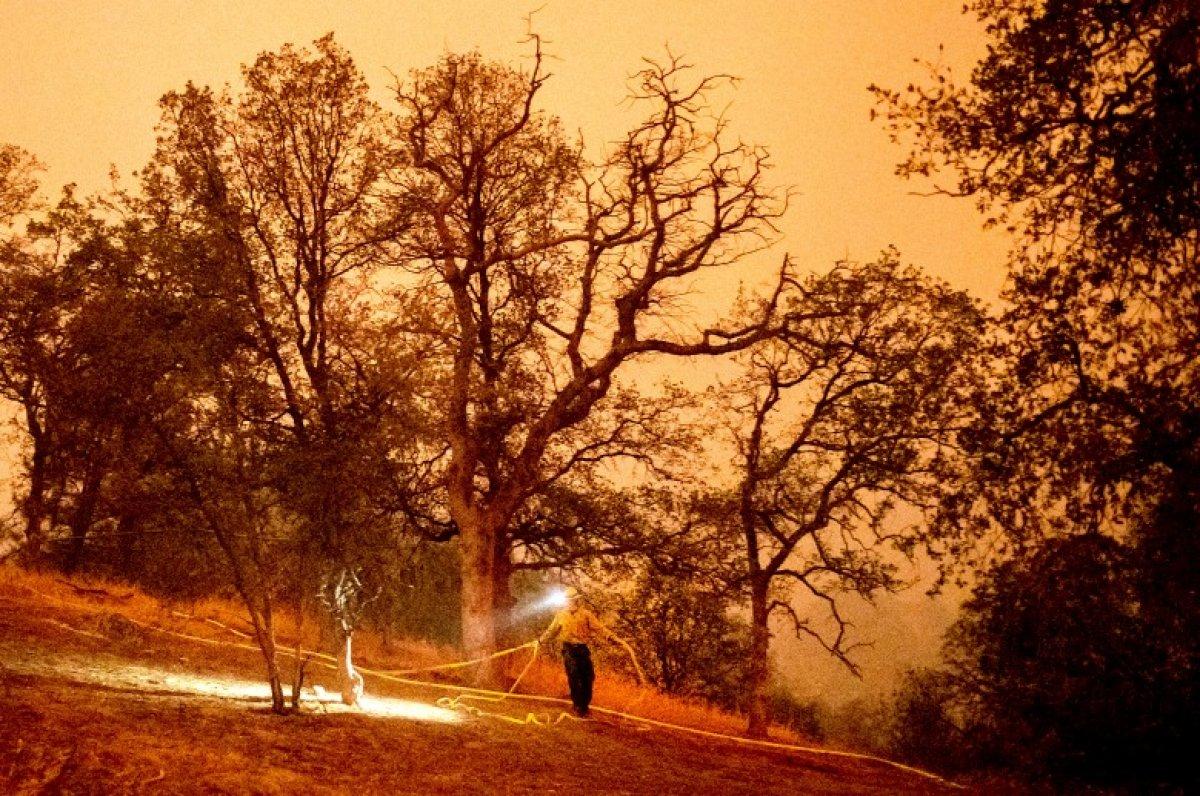 Kaliforniya daki yangınlarda dünyanın en büyük ağaçları tehdit altında #2