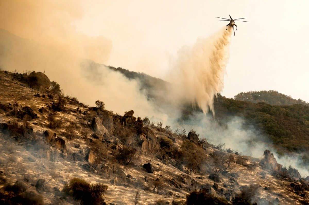 Kaliforniya daki yangınlarda dünyanın en büyük ağaçları tehdit altında #4