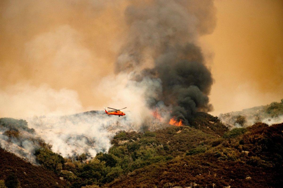 Kaliforniya daki yangınlarda dünyanın en büyük ağaçları tehdit altında #5