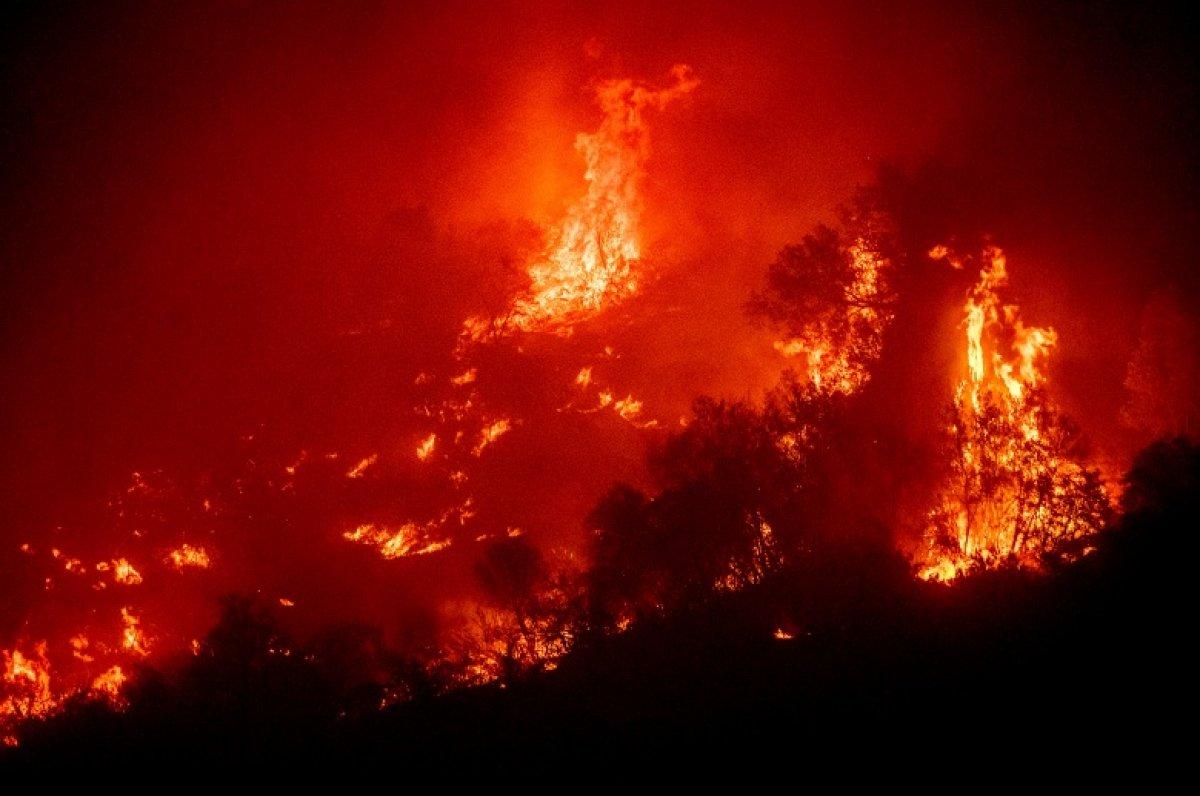 Kaliforniya daki yangınlarda dünyanın en büyük ağaçları tehdit altında #1