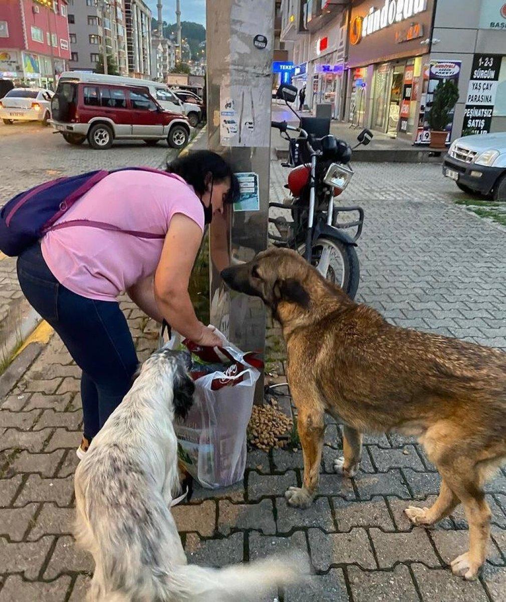 Artvin de kaybolan sokak köpekleri, hayvan severleri ayağa kaldırdı #4