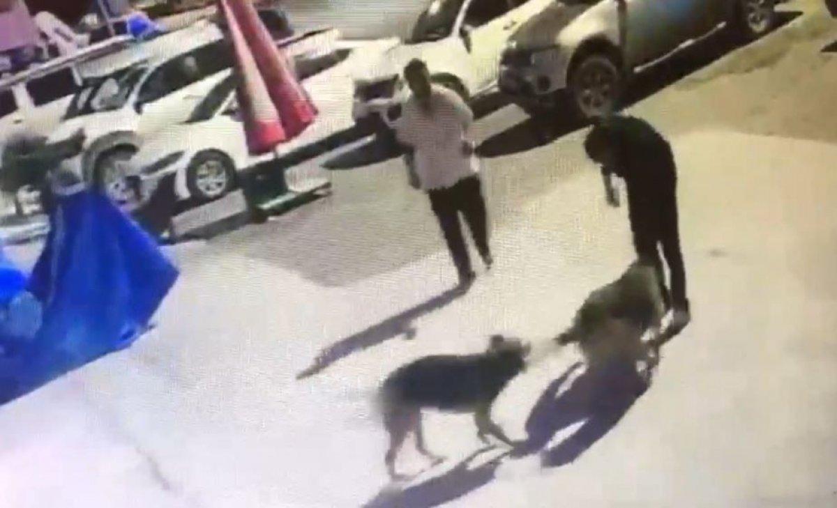Artvin de kaybolan sokak köpekleri, hayvan severleri ayağa kaldırdı #3