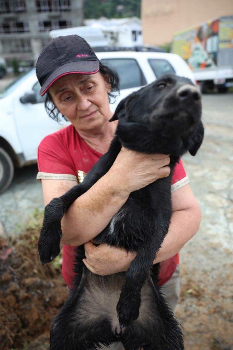 Artvin de kaybolan sokak köpekleri, hayvan severleri ayağa kaldırdı #5