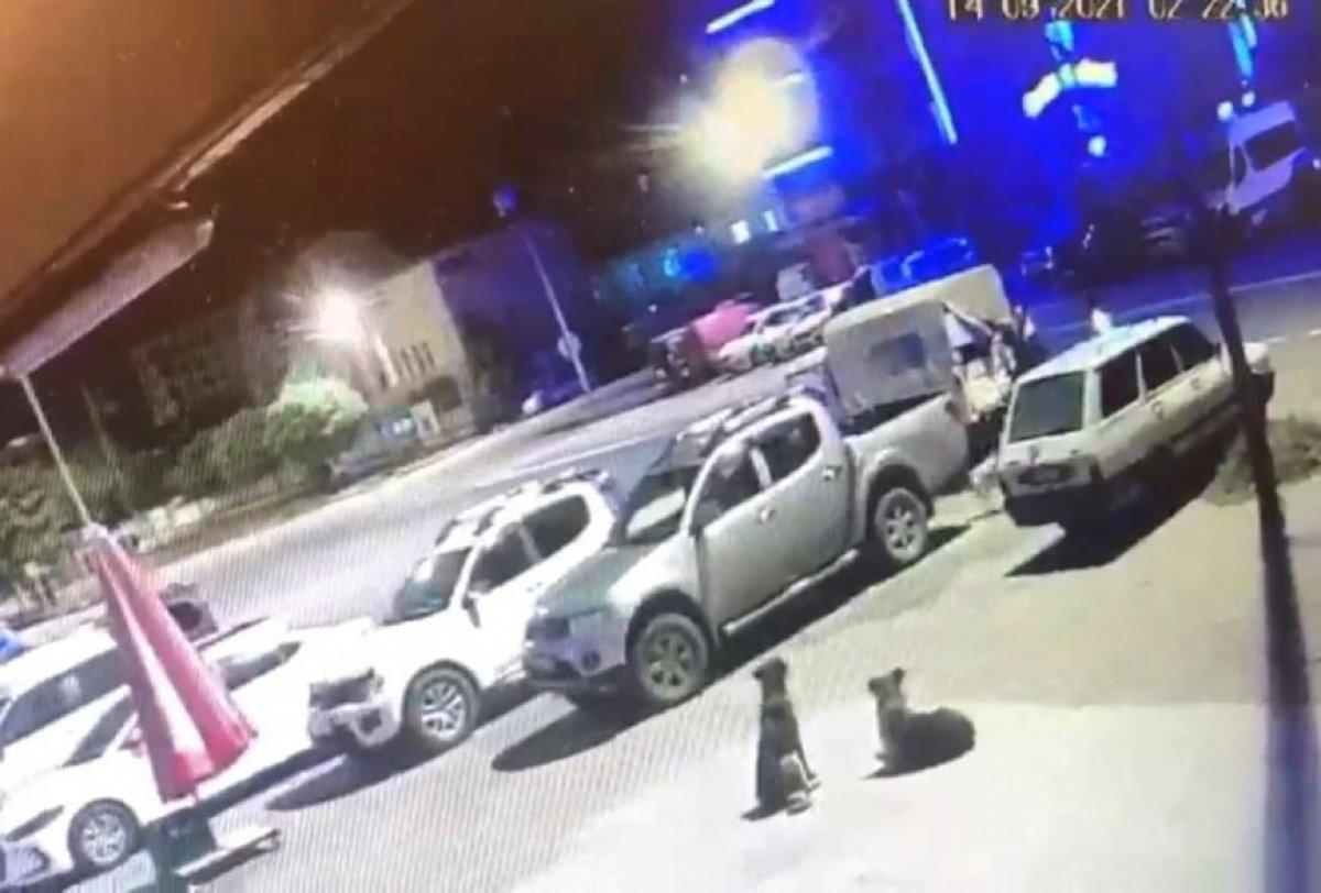 Artvin de kaybolan sokak köpekleri, hayvan severleri ayağa kaldırdı #1