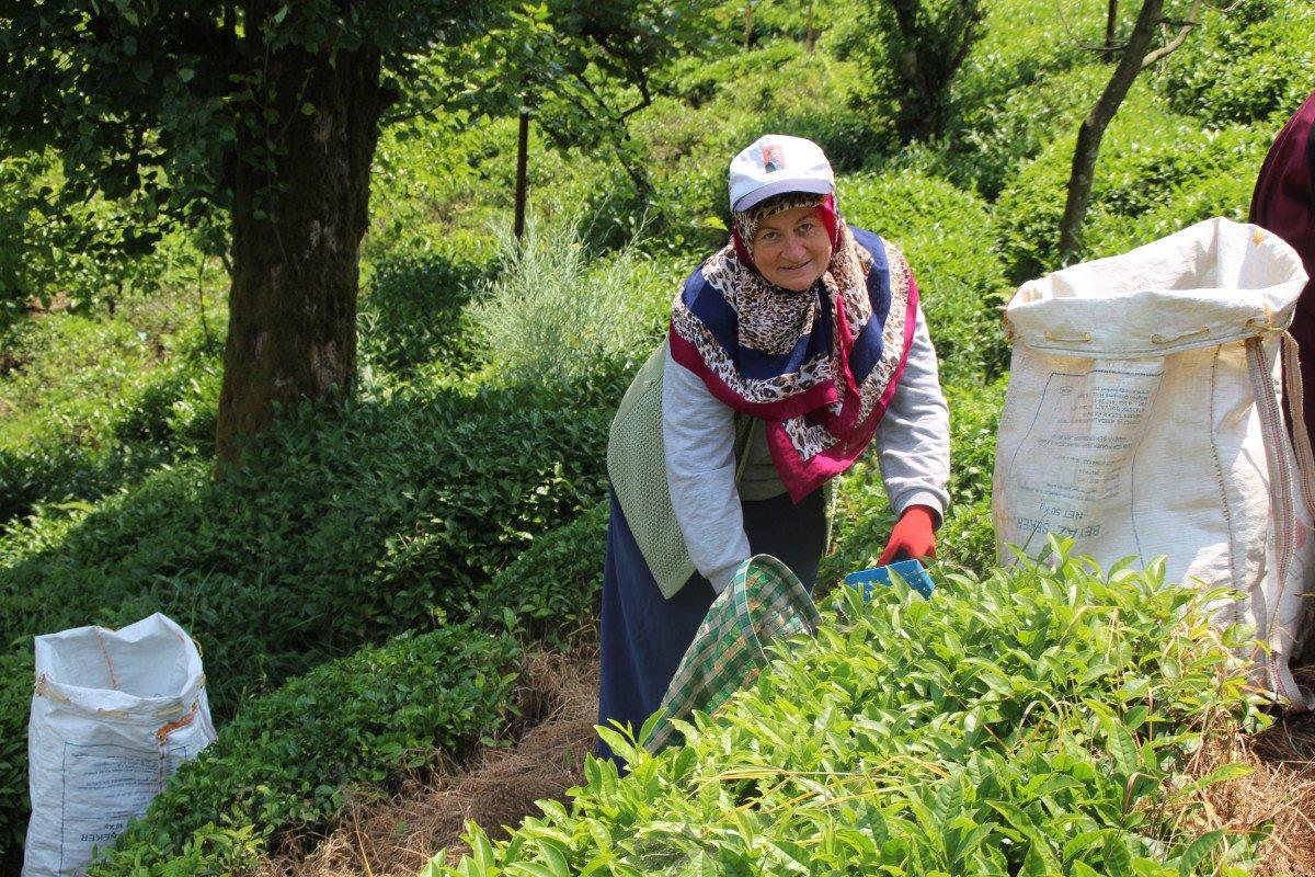 Rize de çay üreticileri hasadı kendileri yaptı: 100 milyon dolar bölgede kaldı #1