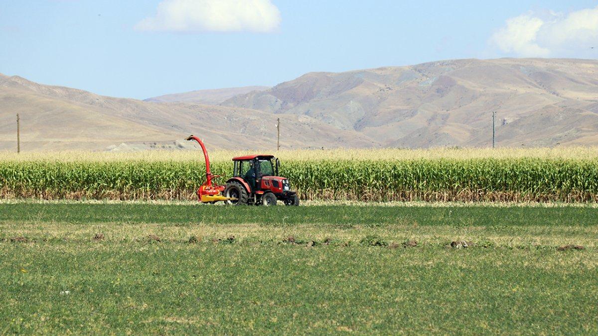 Ağrı da devlet destekli silajlık mısırın hasadına başlandı #4