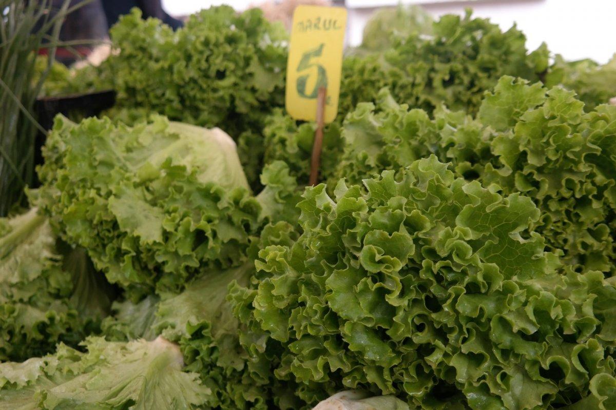 Eskişehir'de marulun fiyatı 10 günde iki katına çıktı #1