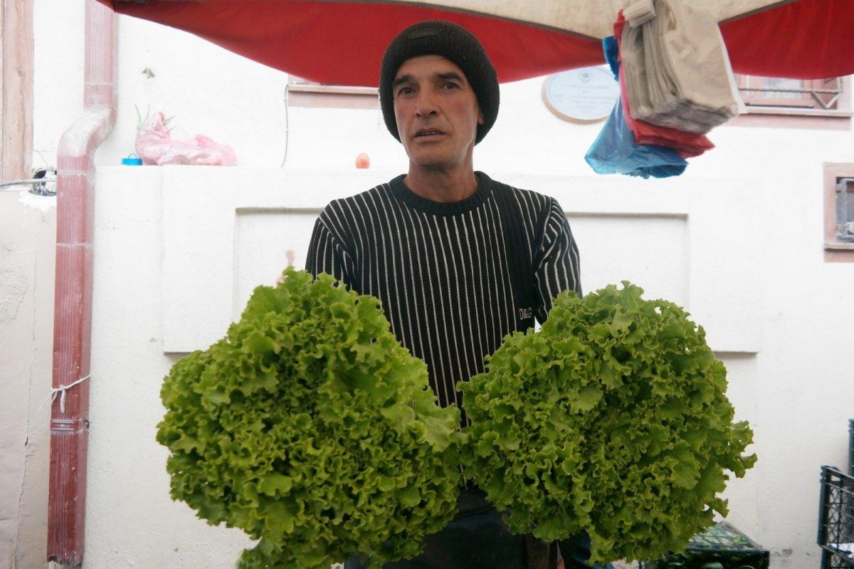 Eskişehir'de marulun fiyatı 10 günde iki katına çıktı #2