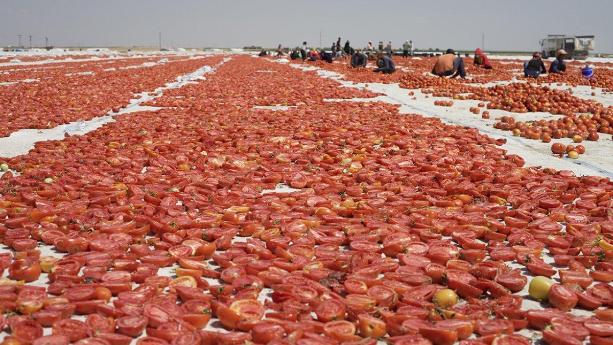 Kuru domates ihracatı 8 ayda 62 milyon dolara ulaştı #1