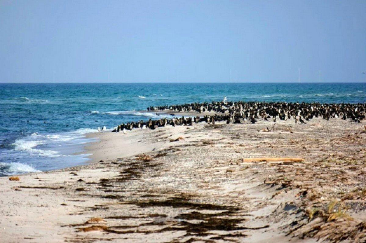 Güney Afrika da 63 penguen arı saldırısına uğradı #2
