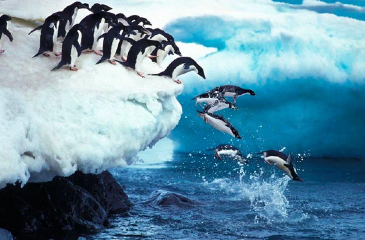 Güney Afrika da 63 penguen arı saldırısına uğradı #4