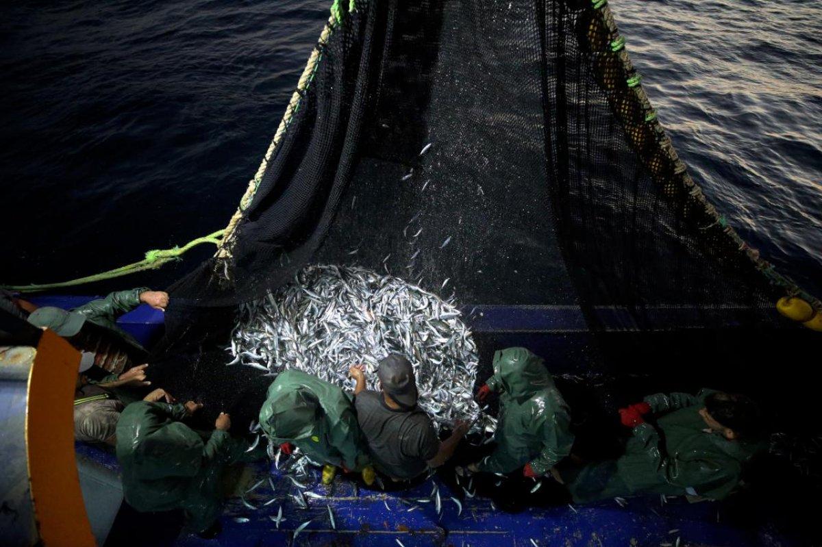 Hataylı balıkçıların av mesaisi başladı #3