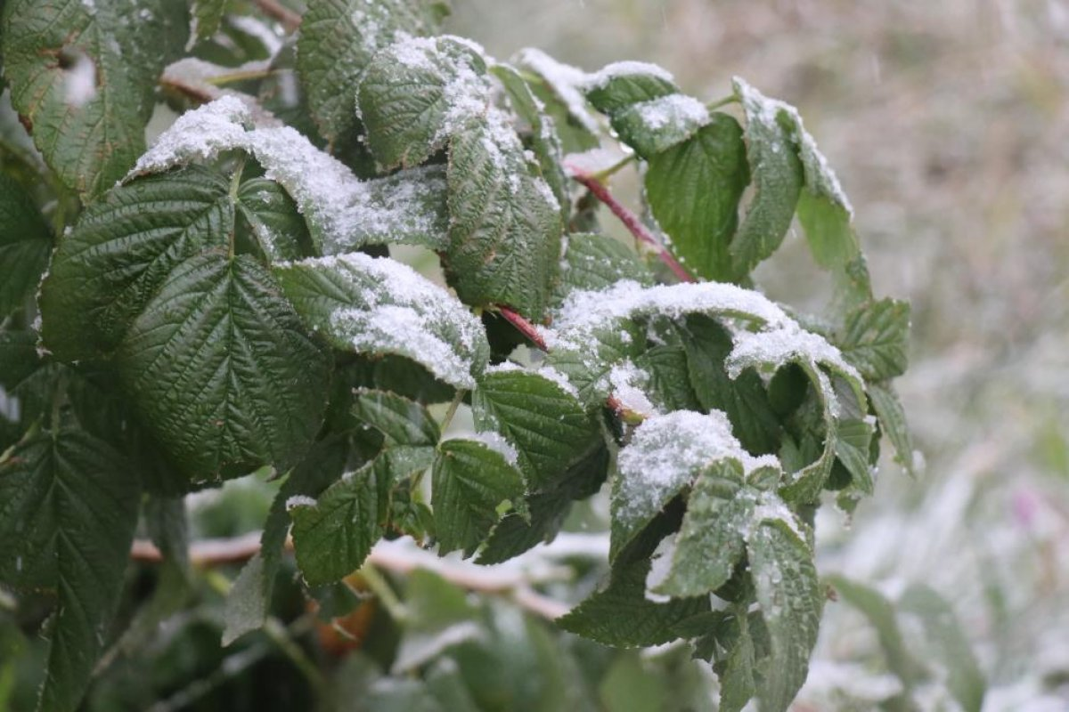 Bolu ya yılın ilk karı düştü #3