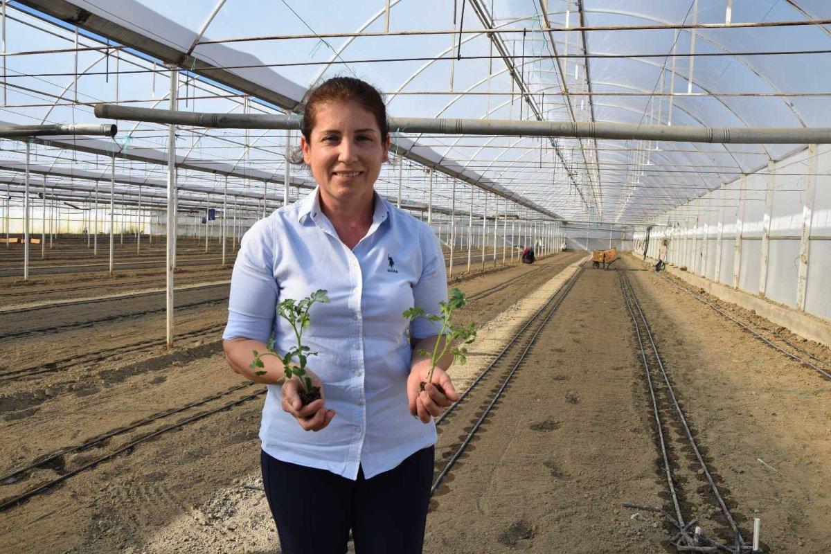Antalya'nın Aksu ilçesinde seralarda kışlık domates ve biber ekimi başladı #4