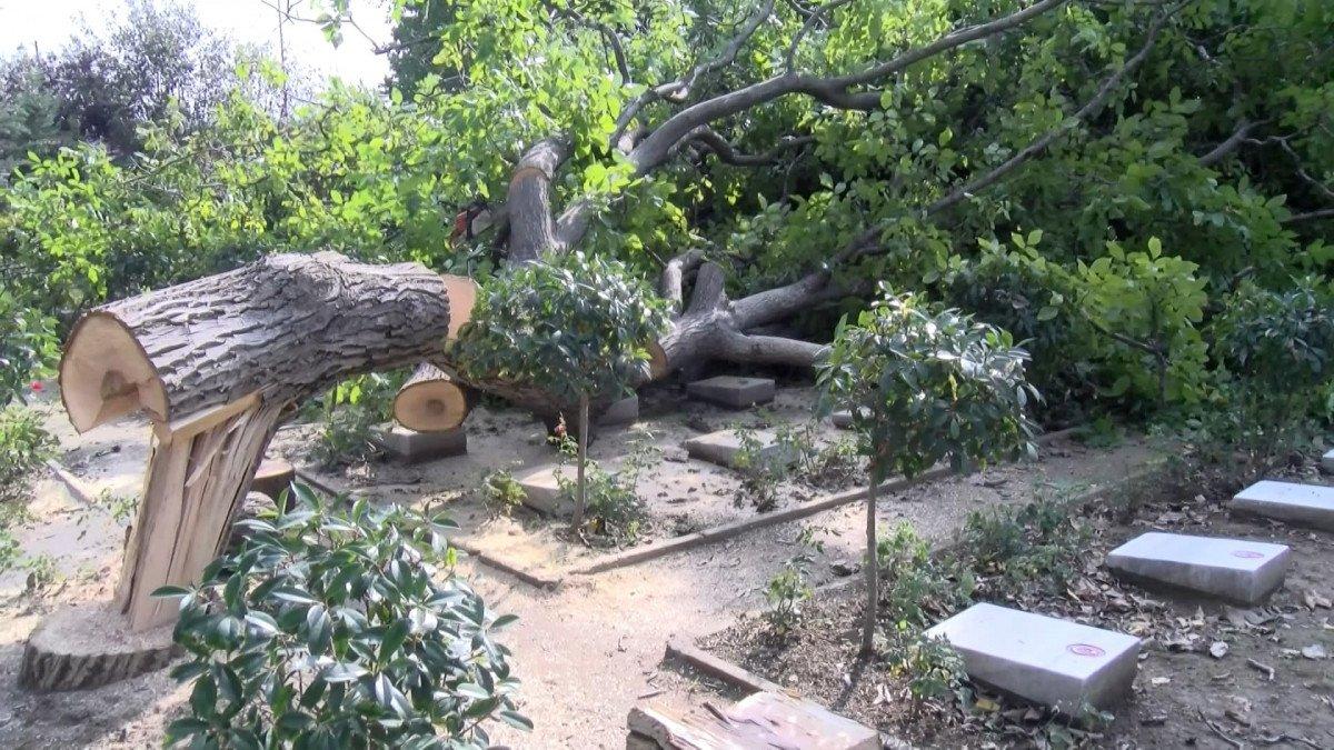 Edirnekapı Şehitliği'ndeki ağaç kesimi tepki topladı #3