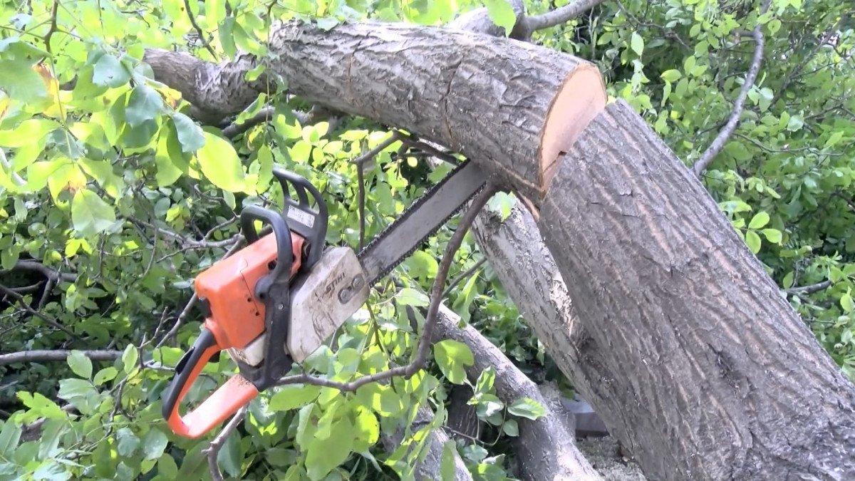 Edirnekapı Şehitliği'ndeki ağaç kesimi tepki topladı #2