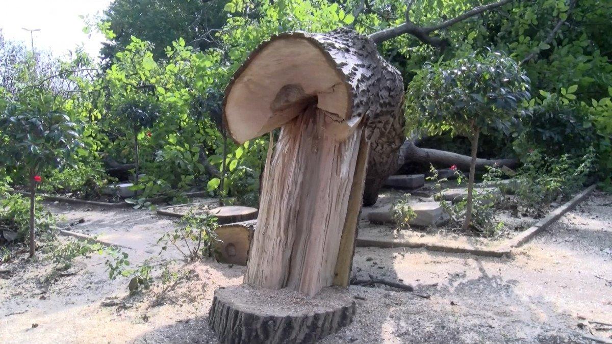 Edirnekapı Şehitliği'ndeki ağaç kesimi tepki topladı #7