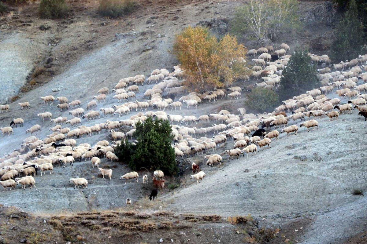 Erzincan da yaylaya çıkan göçerler geri dönüş yolculuğuna geçti #1