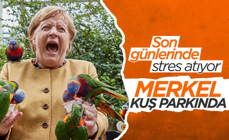 Görevi bırakmaya hazırlanan Angela Merkel, kuş parkını ziyaret etti