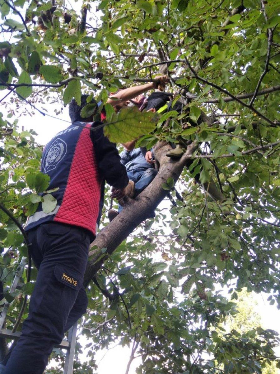 Zonguldak'ta ceviz toplamak için çıktığı ağaçta mahsur kaldı #2