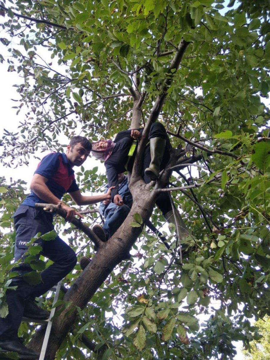 Zonguldak'ta ceviz toplamak için çıktığı ağaçta mahsur kaldı #1