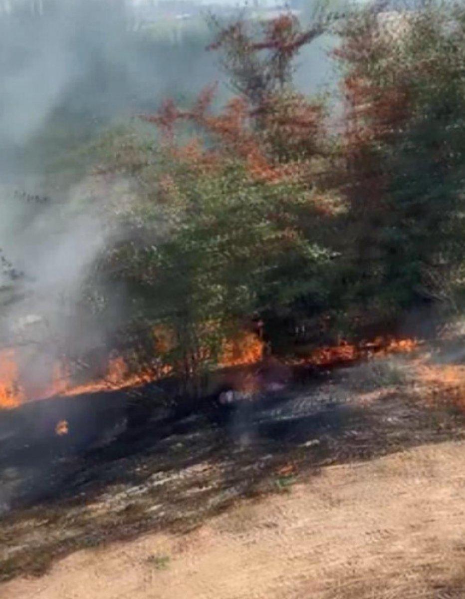 Bayrampaşa da ağaçlık alanda yangın çıktı #2
