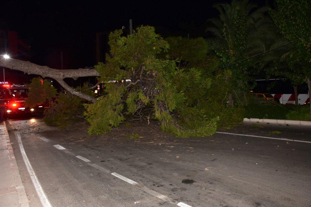 İzmir de çam ağacı yola devrildi, tramvay telleri zarar gördü #2