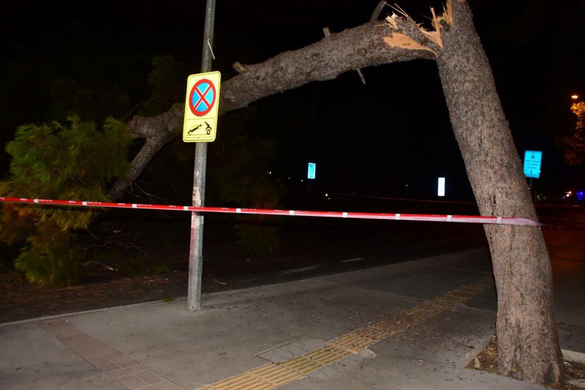 İzmir de çam ağacı yola devrildi, tramvay telleri zarar gördü #1