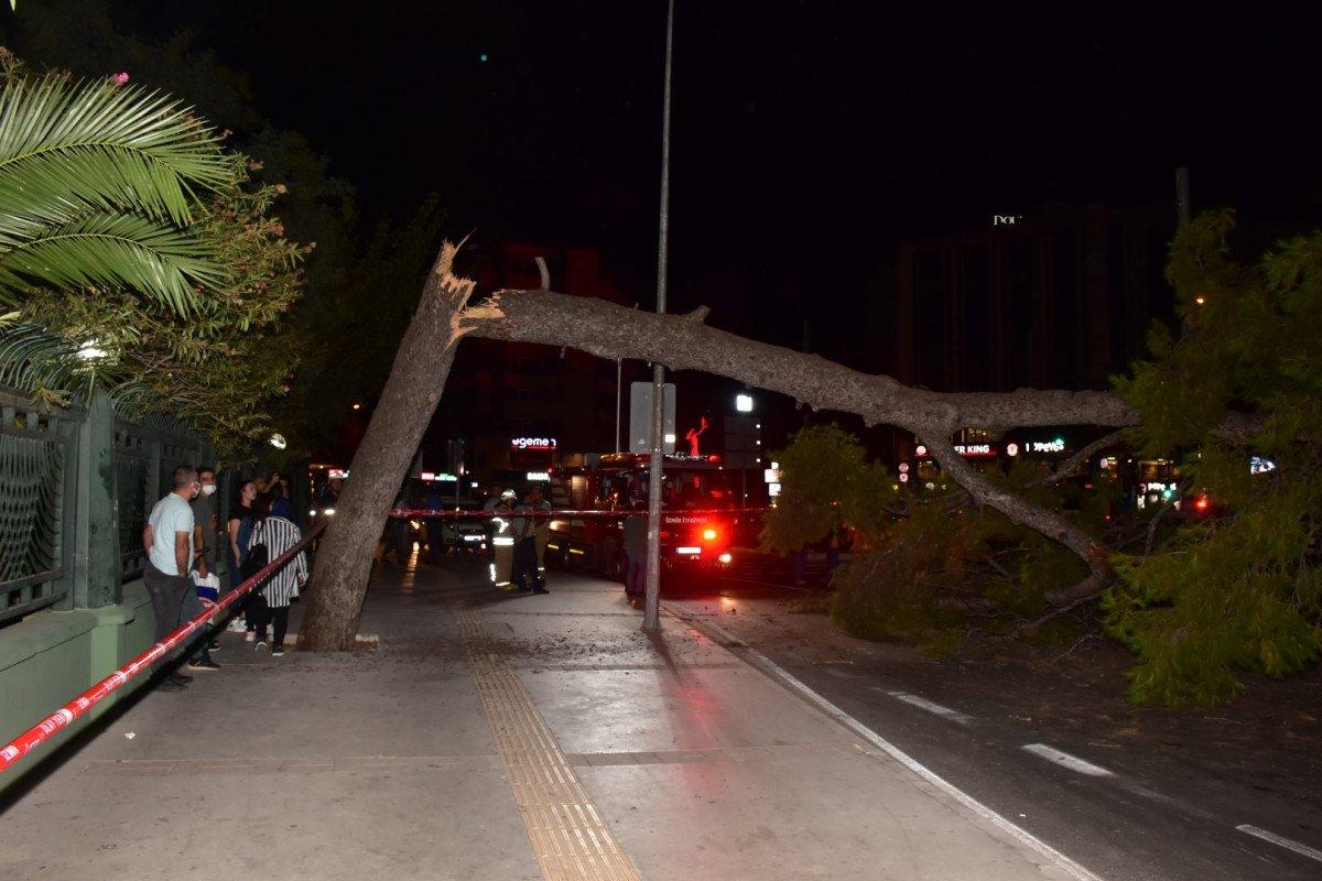 İzmir de çam ağacı yola devrildi, tramvay telleri zarar gördü #5