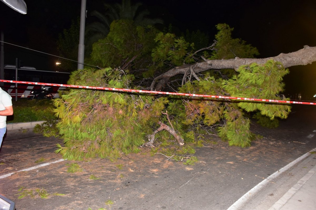 İzmir de çam ağacı yola devrildi, tramvay telleri zarar gördü #4