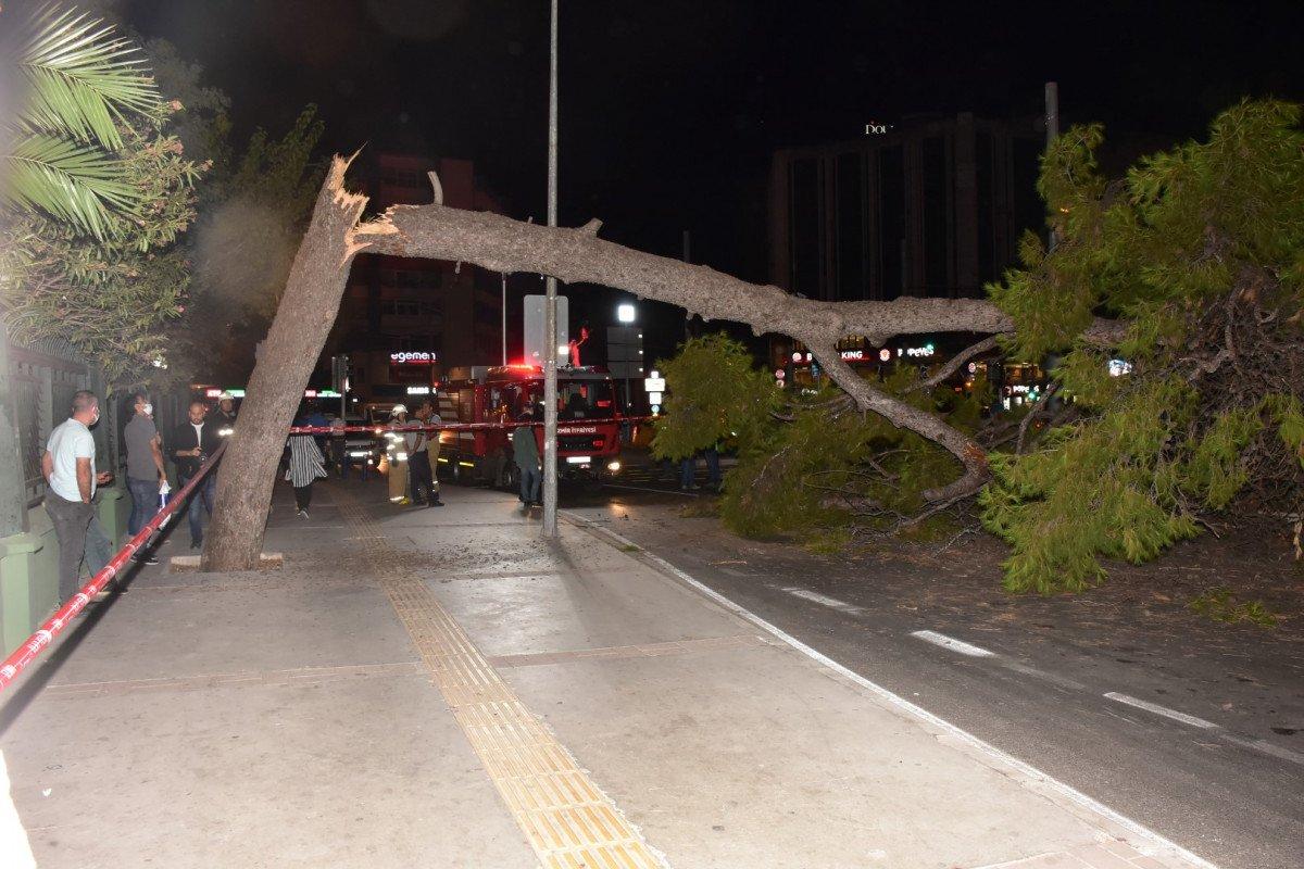İzmir de çam ağacı yola devrildi, tramvay telleri zarar gördü #3