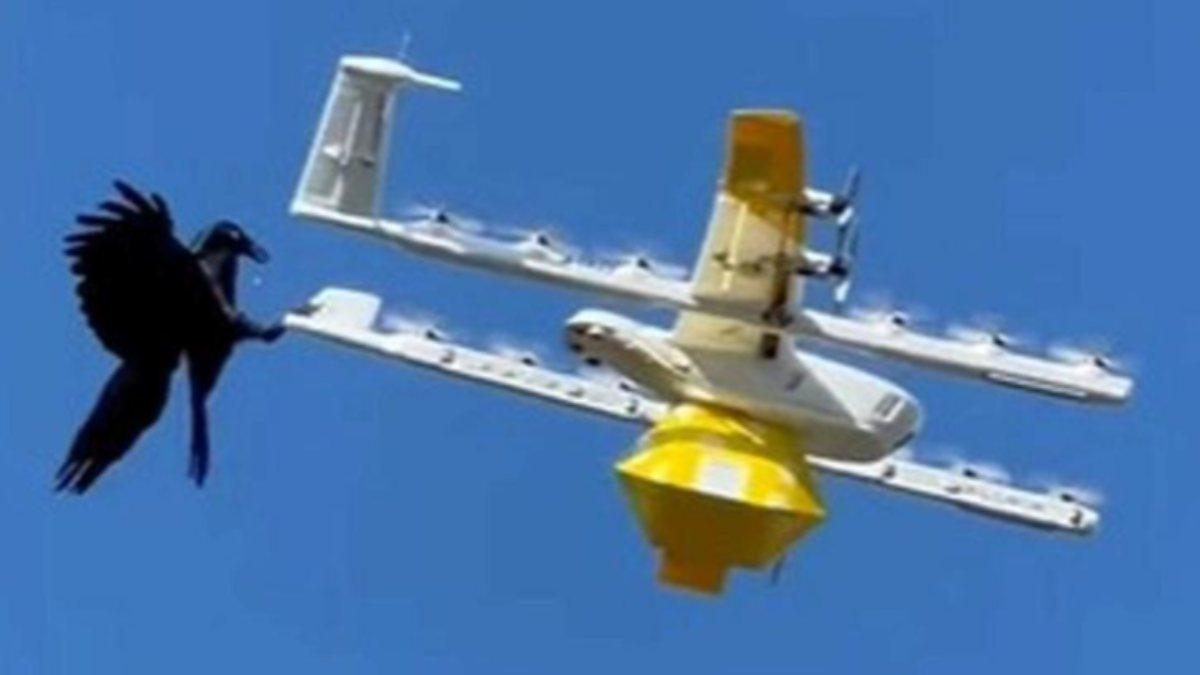 Avustralyada kuşlar, kargo droneuna saldırdı