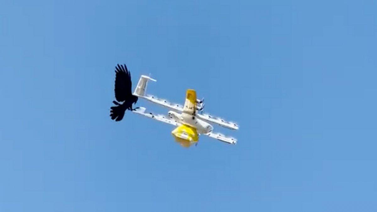 Avustralya da kuşlar, kargo drone una saldırdı #2