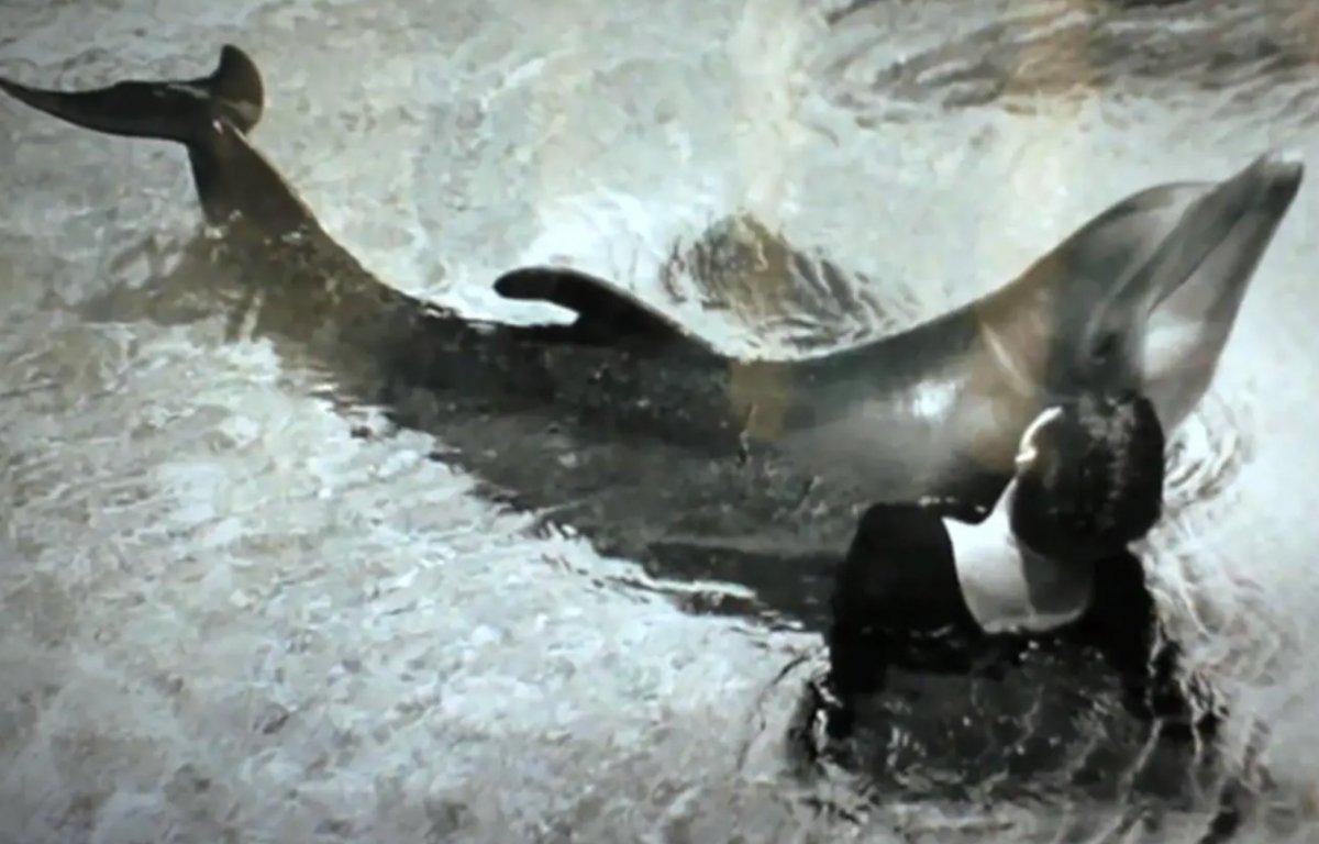 NASA projesinde olan bir kadın, geçmişte yunus balığı ile cinsellik yaşadığını söyledi #3