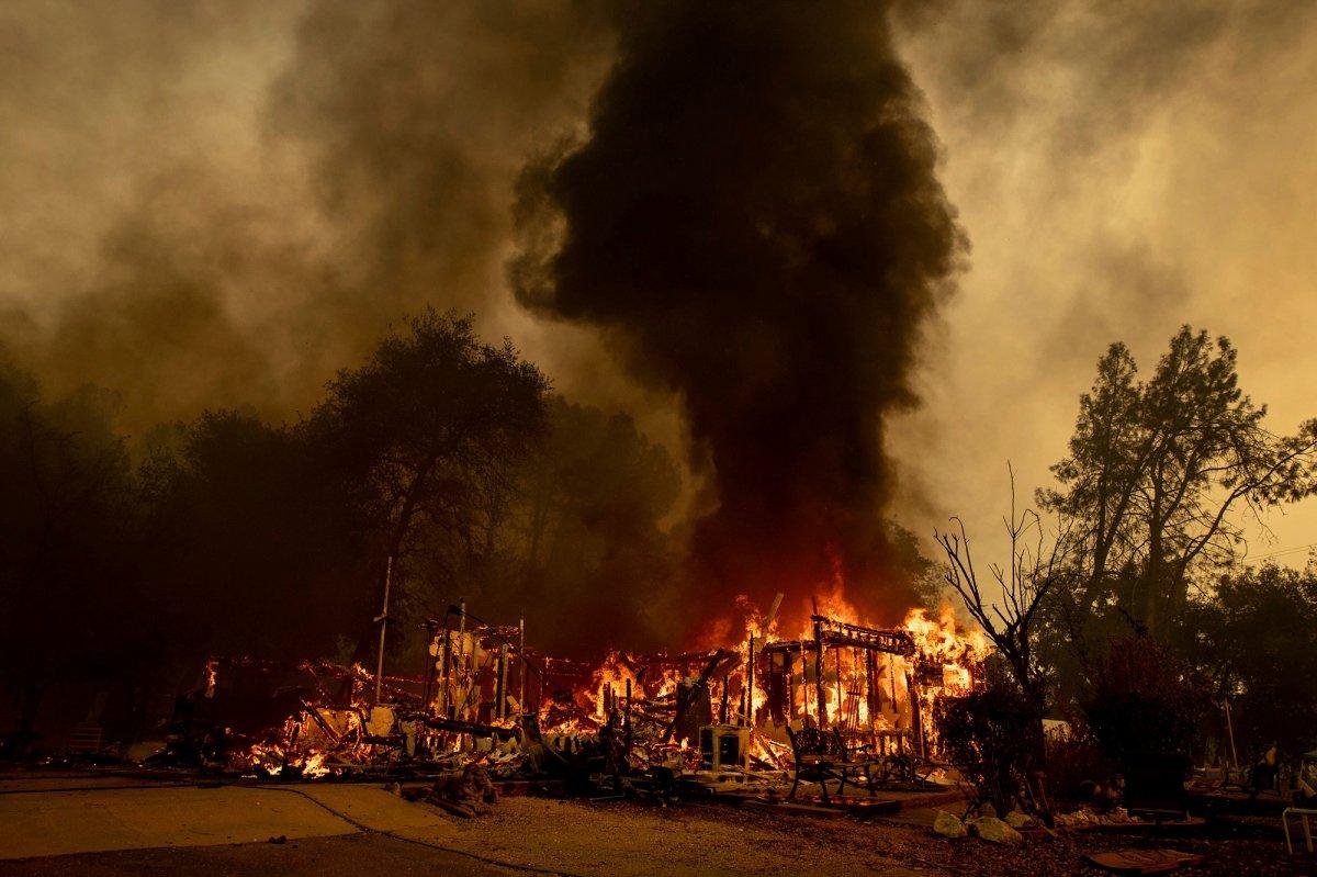 Kaliforniya daki yangında ayı idrarı için yaktığı ateş sorumlu tutuldu #4