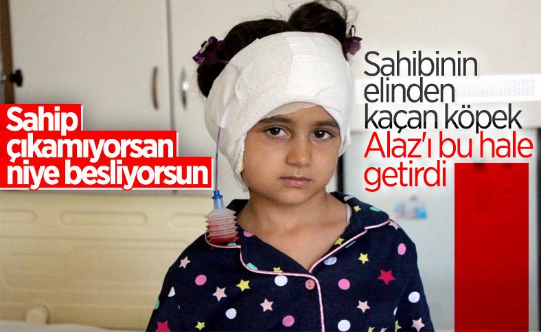 Düzce'de köpek saldırısı: 5 yaşındaki Alaz hastanelik oldu
