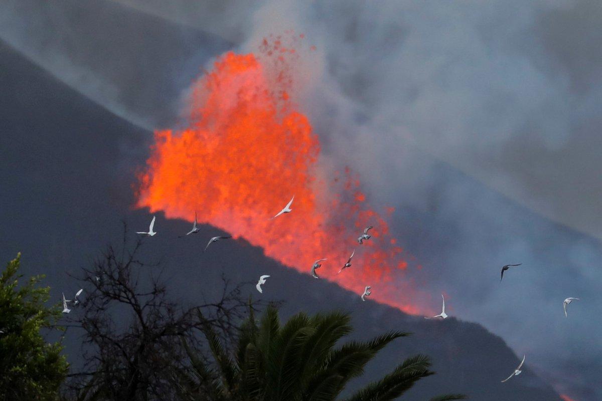 La Palma da lavlar Atlas Okyanusu na ulaştı #3