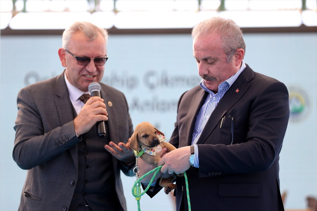 TBMM Başkanı Mustafa Şentop'a, sokak köpeği hediye edildi  #2
