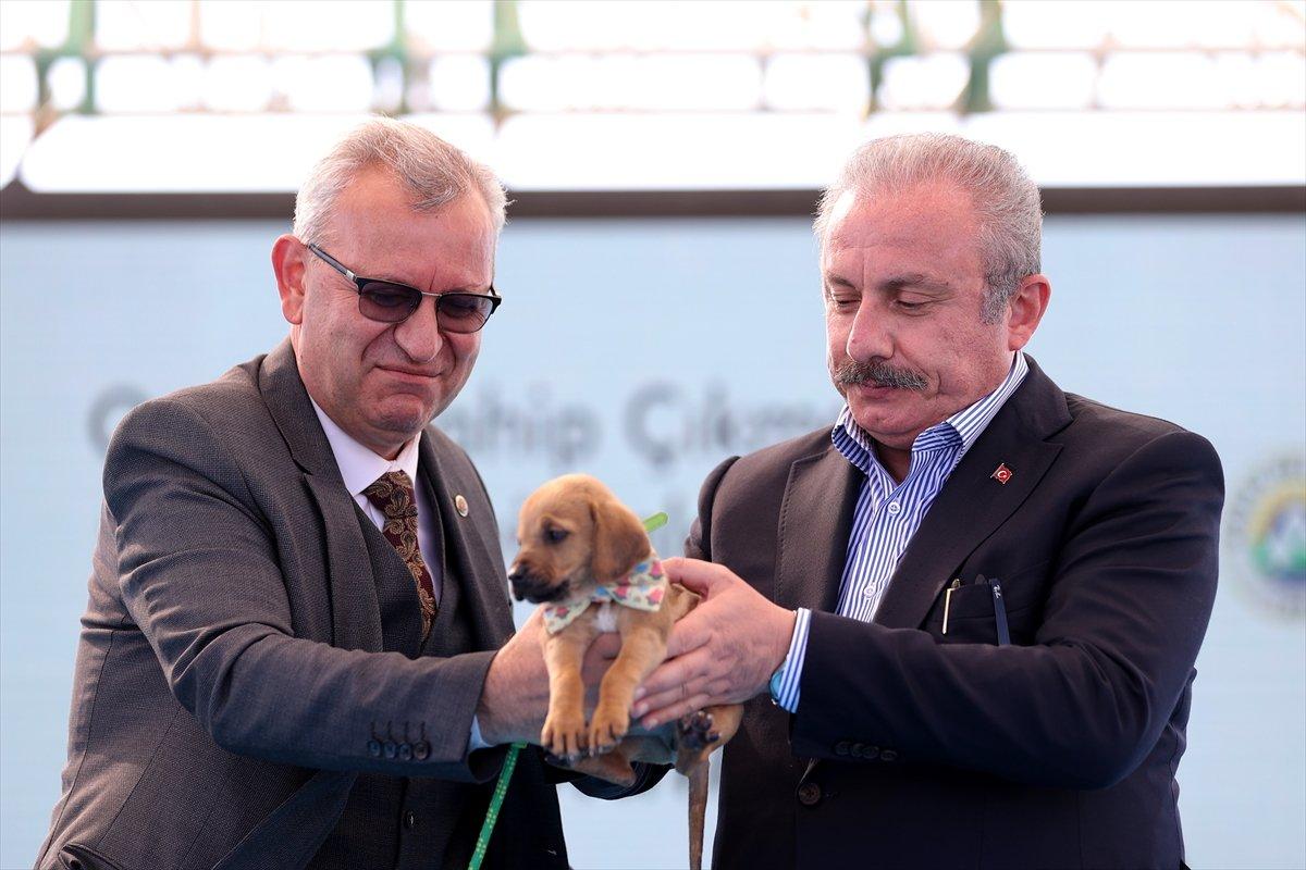 TBMM Başkanı Mustafa Şentop'a, sokak köpeği hediye edildi  #3
